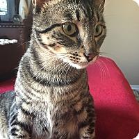 Adopt A Pet :: Stefan - Garland, TX
