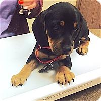 Adopt A Pet :: Montana - Houston, TX