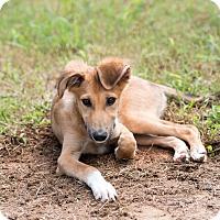 Adopt A Pet :: Kendall - Dacula, GA
