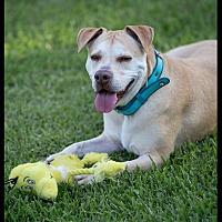 Adopt A Pet :: Luther - Boca Raton, FL