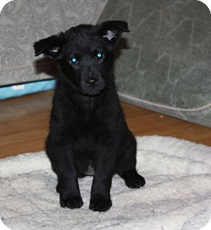Labrador Retriever Mix Puppy for adoption in kennebunkport, Maine - Avery - PENDING, in Maine