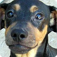 Adopt A Pet :: Baby Colonel - Oakley, CA
