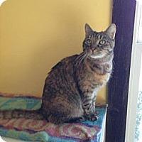 Adopt A Pet :: Minnie - Lancaster, MA