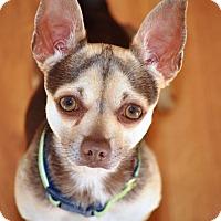Adopt A Pet :: Rico - Vacaville, CA