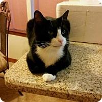 Adopt A Pet :: Jasmine - Crestview, FL