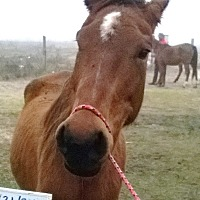 Quarterhorse Mix for adoption in Hitchcock, Texas - Satin