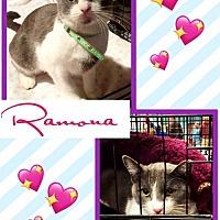Adopt A Pet :: Ramona - Bogalusa, LA