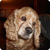 Adopt A Pet :: Flint/Cooper -Adopted! - Kannapolis, NC