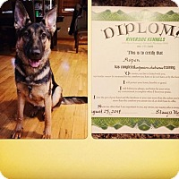 Adopt A Pet :: Aspen - Hamilton, MT