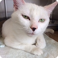 Adopt A Pet :: Miracle (PetValu) - Trenton, NJ