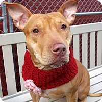 Adopt A Pet :: Jazmine - New York, NY