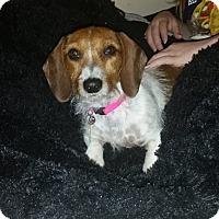 Adopt A Pet :: Delilah - Dublin, GA