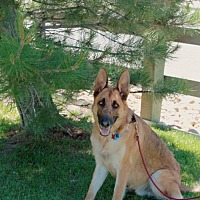 Adopt A Pet :: Buck - Denver, CO