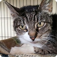 Adopt A Pet :: Mimi - Templeton, MA
