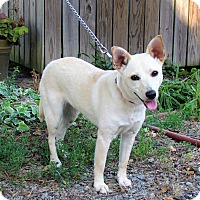 Adopt A Pet :: CAPRI - Bedminster, NJ