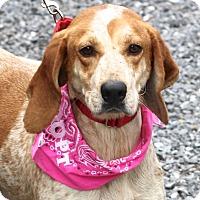 Adopt A Pet :: Amelia - West Grove, PA