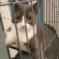 Adopt A Pet :: Andy - Brownwood, TX