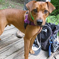 Adopt A Pet :: Champ-Rutherford - Asheville, NC
