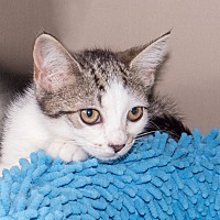 Adopt A Pet :: Cutetwo - Elmwood Park, NJ
