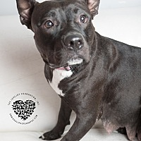 Adopt A Pet :: Collette - Inglewood, CA