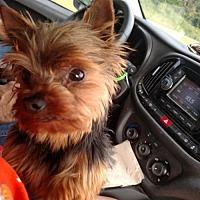 Adopt A Pet :: BOSS 2.6 lbs. - WOODSFIELD, OH