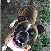 Adopt A Pet :: Lady - Brentwood, TN