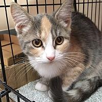 Adopt A Pet :: Daisy - East Brunswick, NJ