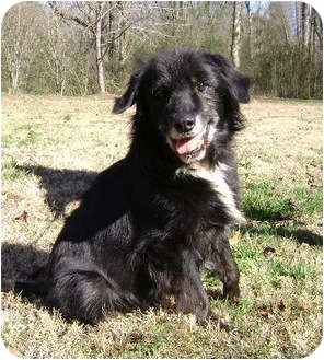 Border Collie Mix Dog for adoption in Oliver Springs, Tennessee - Beowoof