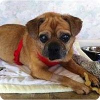 Adopt A Pet :: Cupid - Poway, CA