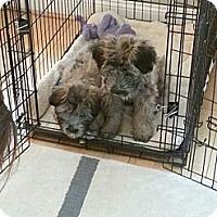 Adopt A Pet :: Mong - Clarksburg, MD