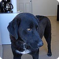 Adopt A Pet :: Rocco - Beaver, UT