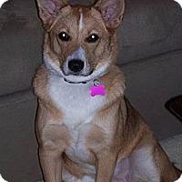 Adopt A Pet :: Shamrock (Strudel) - Rockaway, NJ