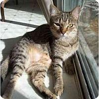 Adopt A Pet :: Kitty - El Cajon, CA