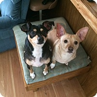 Adopt A Pet :: Tanner & Chumley - Medora, IN