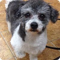 Adopt A Pet :: Bella - Dover, MA