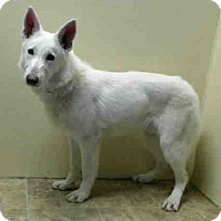 Adopt A Pet :: TOMMY - Tully, NY