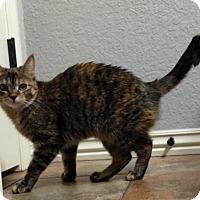 Adopt A Pet :: Maggie - Bentonville, AR