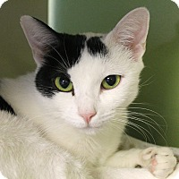 Adopt A Pet :: Fran Bow - Chicago, IL