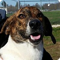 Adopt A Pet :: Dutch - Huntingburg, IN