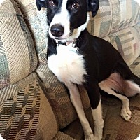 Adopt A Pet :: PENNY - selden, NY
