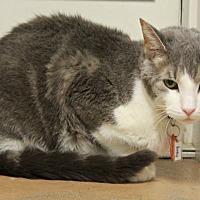 Adopt A Pet :: Binky - New Richmond,, WI