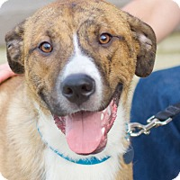 Adopt A Pet :: Brooks - Homewood, AL