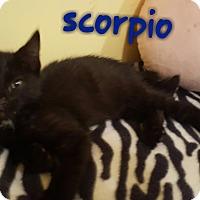 Adopt A Pet :: Scorpio - McDonough, GA