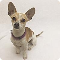 Adopt A Pet :: Sawyer - Mission Viejo, CA