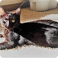 Adopt A Pet :: Georgie - Edmond, OK