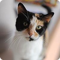 Adopt A Pet :: Bandit - Kanab, UT