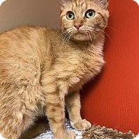 Adopt A Pet :: Fanta - Maryville, MO