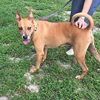 Adopt A Pet :: Simon - Boca Raton, FL