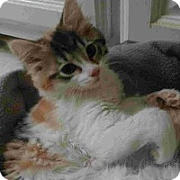 Adopt A Pet :: Maddie - Hampton, VA