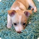 Adopt A Pet :: Dawn